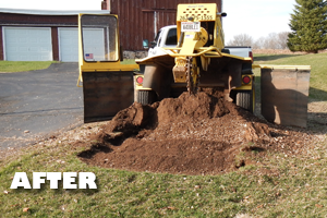 Affordable Tree Service - Services: Stump Grinding