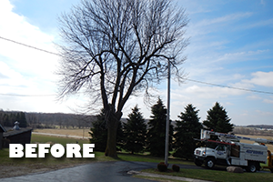 Affordable Tree Service - Services: Tree Removal