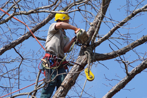 Affordable Tree Service - Services: Tree Trimming